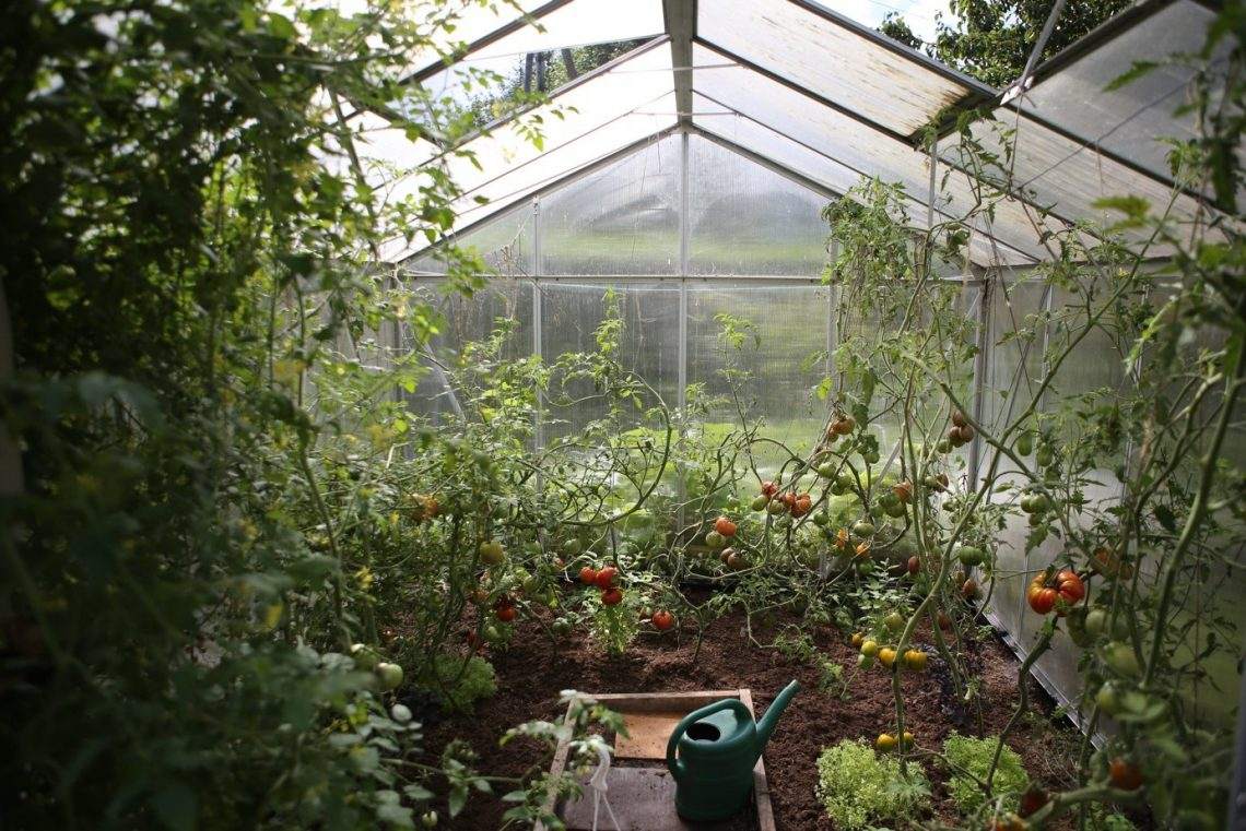 4 voordelen van groente kweken in een tuinkas