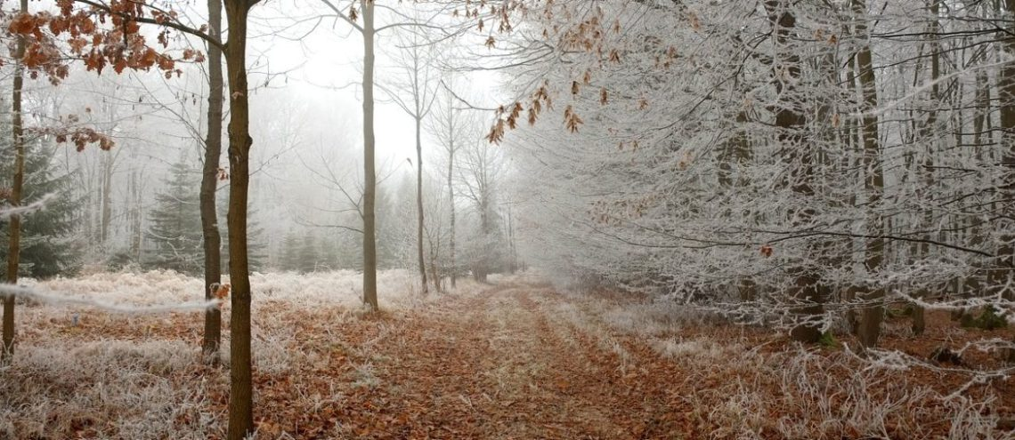 Kerst in Drenthe